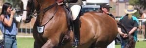 Jane Veall's handsome gelding 'Remi Rockefella' by Rotspon