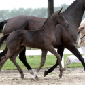 2014 foal pictorial