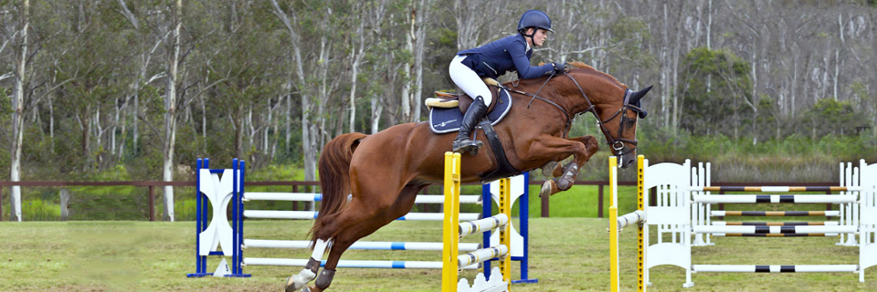 Hanoverian Horse Society of Australia - Preminition
