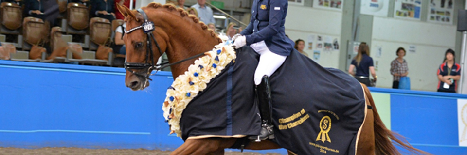 Hanoverian Horse Society of Australia - Rubinelle