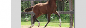2016 HHSA Foal Pictorial
