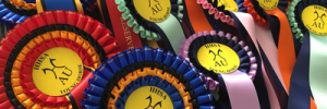 HHSA YH 2018 Rosettes